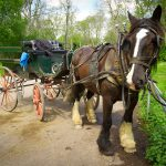 Horse drawn jaunting car ride in Killarney National Park