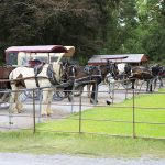 Horse Drawn jaunting cars waiting at Ross Castle for their passengers