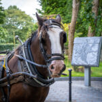 "Enjoy the sights of Killarney National Park from the traditional Jaunting Car. Operating all year-round, the Killarney Jaunting car trip is a ""must"" for every one visiting Killarney."